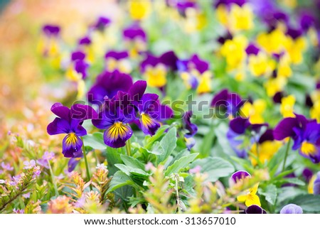 Garden with colorful flower patches - stock photo