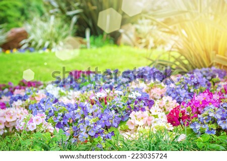 Garden with freshly  flower - stock photo
