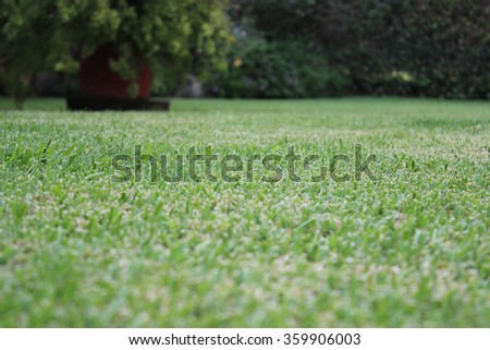 Garden with green grass