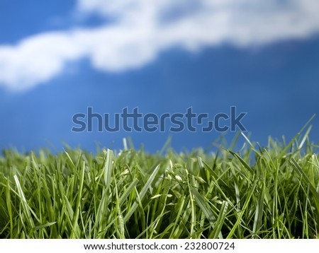 garden with sky background - stock photo