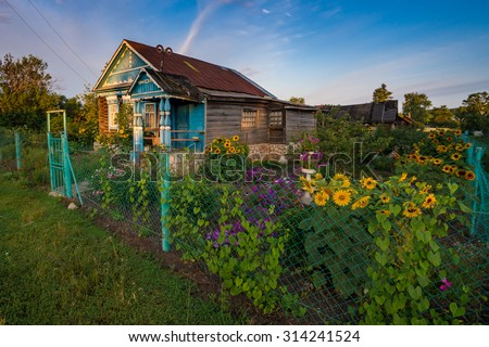 Garden with Sunflowers in front of old wooden house in russian v