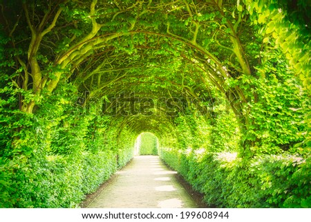 Garden with trees and light - stock photo