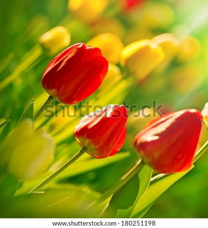 Garden with tulips - stock photo