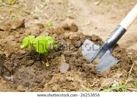 garden work - digging with shovel - stock photo