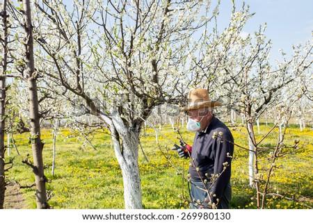 Gardener applying an insecticide/a fertilizer to his fruit shrubs, using a sprayer. Selective focus - stock photo