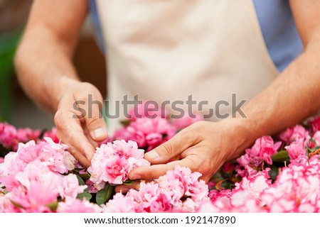 Gardener. Cropped image of man in apron taking care of flowers while standing in greenhouse - stock photo