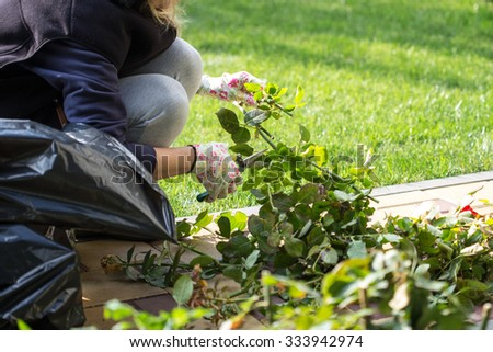 Gardener cuts the rose bushes - stock photo