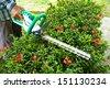 Gardener cutting a bush - stock photo