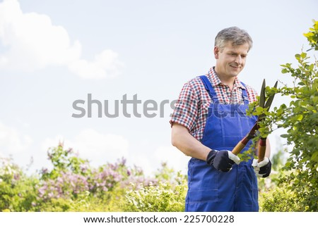 Gardener cutting branches at plant nursery - stock photo