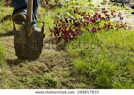 Gardener digging hole in order to plant tree - stock photo