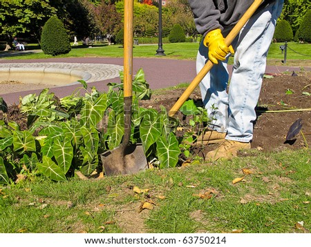 Gardener digging up flower bed in preparation for fall