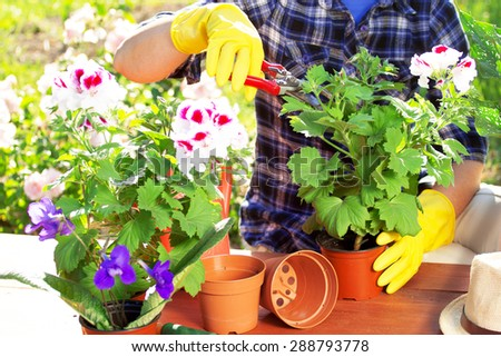 Gardener. Flowers in pots.