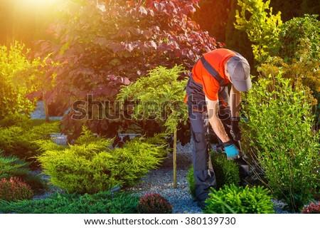 Gardener Garden Works. Caucasian Gardener at Work. Beautiful Summer Day in the Garden - stock photo