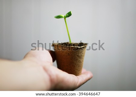 gardener hand sprout in palms