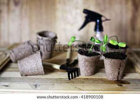 gardener hand sprout table - stock photo