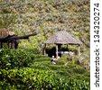 Gardener harvesting tea leaves on the hill - stock photo
