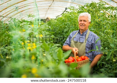 Gardener in the greenhouse - stock photo