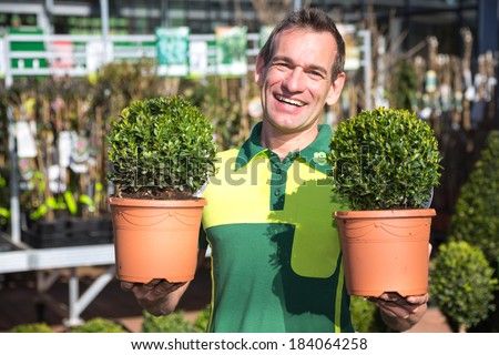 Gardener or employee at garden center posing with two boxtrees - stock photo