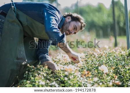 Gardener pruning at nursery - stock photo