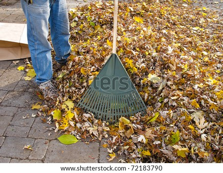 Gardener raking fall leaves - stock photo
