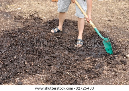 Gardener shoveling cedar mulch - stock photo