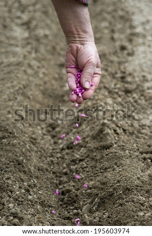 Gardener sows seeds in soil - stock photo