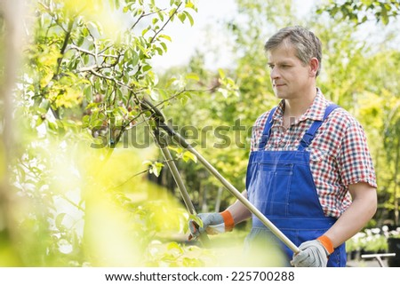 Gardener trimming tree branches at plant nursery - stock photo