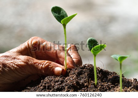 Gardeners are planting seedlings in agricultural plots.