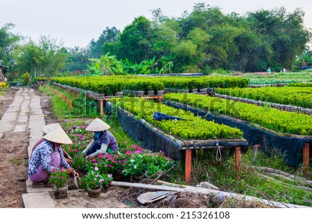 Gardeners care for the flowers in their garden in Sa Dec, Dong Thap, Vietnam. Sa Dec is flower producing center.