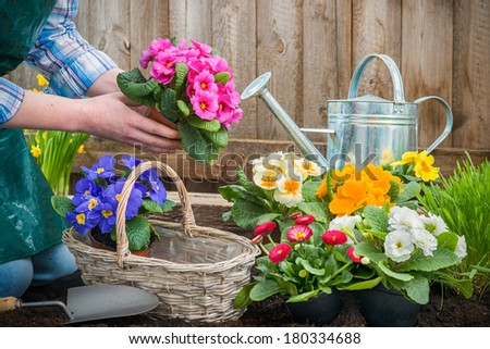 Gardeners hands planting flowers in pot with dirt or soil at back yard - stock photo