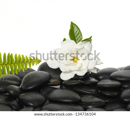 gardenia flowers with green fern on black stones - stock photo