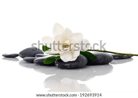 Gardenia with leaf and zen stones - stock photo