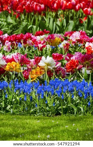 Gardening and Landscaping Bright Tulip Flowers