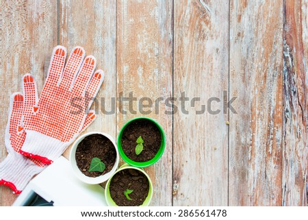 gardening and planting concept - close up of seedlings, garden gloves on table - stock photo