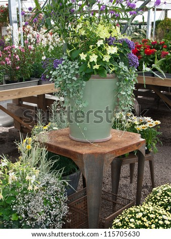 Gardening. Arrangement of colorful plants and flowers in a greenhouse. - stock photo