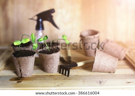 gardening at home hand sprout table - stock photo