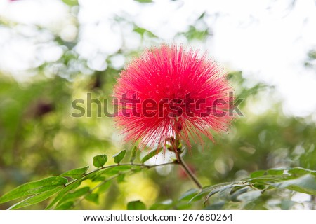 gardening, botany and flora concept - beautiful exotic flower at garden or park - stock photo