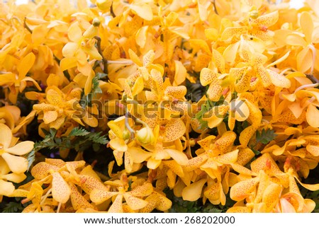 gardening, botany, texture and flora concept - beautiful orchid flowers - stock photo