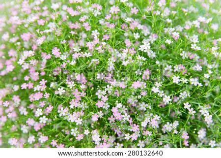 gardening, botany, texture and flora concept - beautiful wildflowers field texture - stock photo