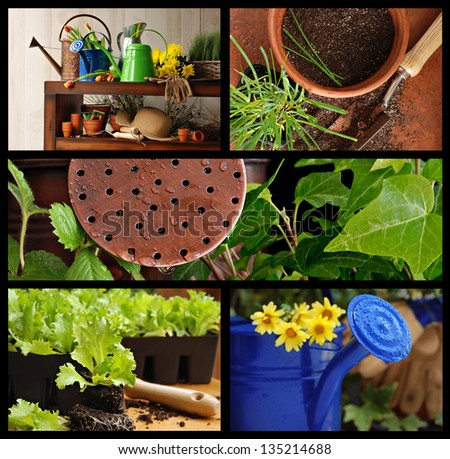 Gardening collage includes still life of gardening supplies, watering cans with flowers, lettuce plants, and top view of flower pot with spade and young chive plant. - stock photo