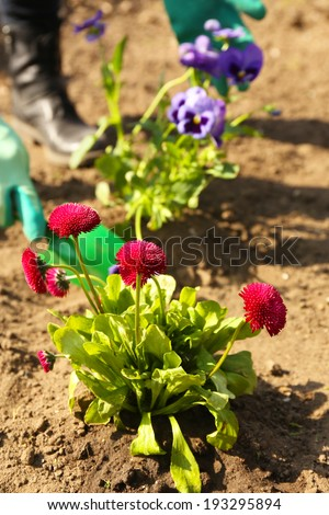 Gardening concept: beautiful flowers in garden with sun light