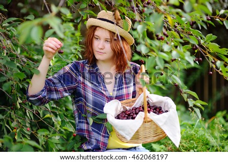 Gardening concept: young woman in straw hat pick berries from cherry tree