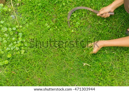 Gardening - detail of woman cutting grass with a sickle.weeding hands.moving(selective focus)