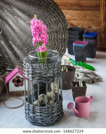 Gardening on the window. Pink hyacinth and seedlings in peat pots on a background of pots for seedlings and gloves - stock photo