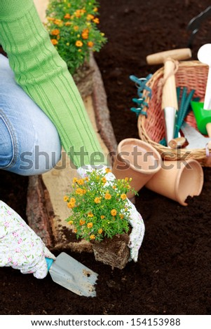 Gardening, planting - woman planting flowers in the garden - stock photo