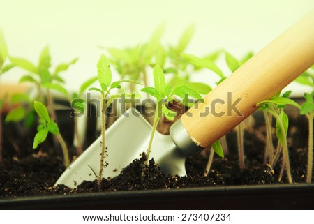 Gardening. Shovel and rake in the garden. - stock photo