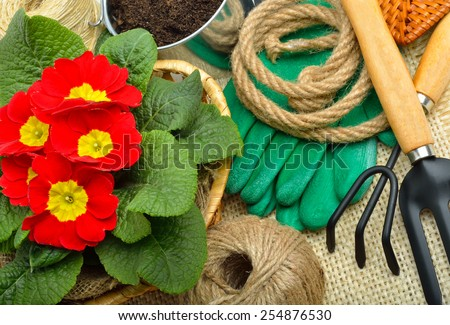 Gardening tools and beautiful red primula in flowerpot on the sacking background. - stock photo