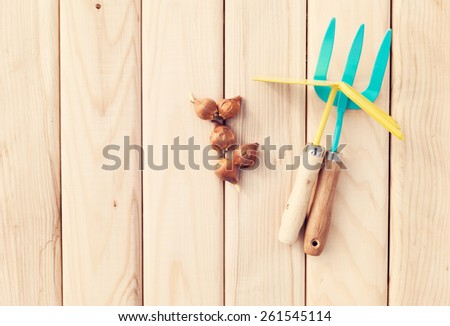 Gardening tools and flower bulbs on a wooden background - stock photo