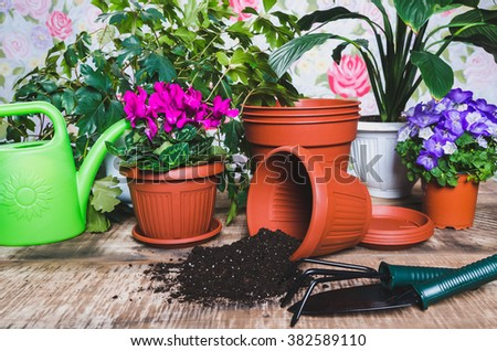 Gardening tools and flower on wooden background, watering can