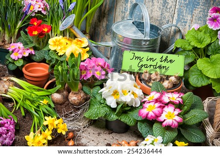 Gardening tools and flowers in the garden - stock photo